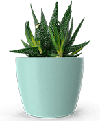 An image of an indoors potted plant