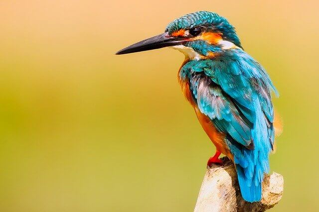 graphic design agency: kingfisher on a tree brunch